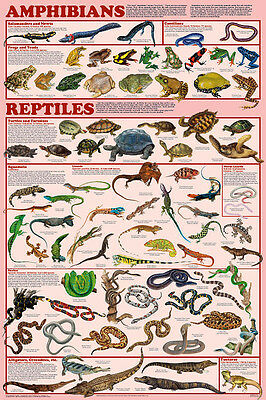 Amphibians and Reptiles Educational Science Classroom Chart Poster 24x36