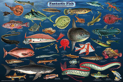 Fantastic Fish Laminated Educational Science Classroom Chart Poster 24x36