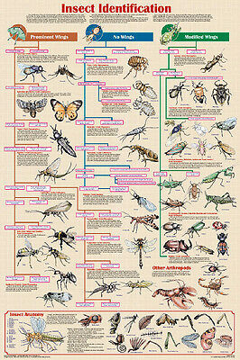 Insect Identification Educational Science Arthropod Classroom Chart Poster 24x36