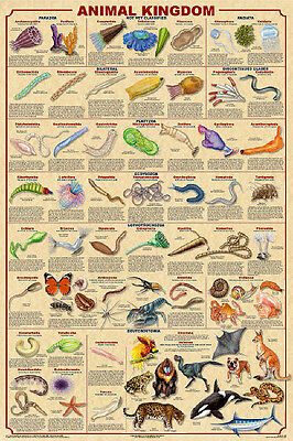 Dinosauer Evolution Educational Science Teacher Classroom Chart Poster 24x36