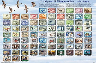 Duck Stamps Laminated Educational Collectors Reference Chart Print Poster 24x36