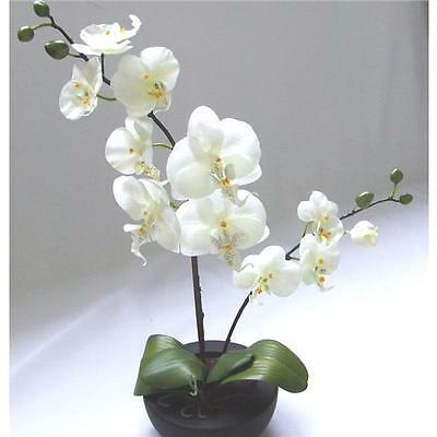 Artificial Potted Orchid in Bowl - Cream Flowers