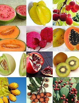 mix 40 fresh mango,lychee,rambutan/payapa tree/plant/fruit seeds from Asia