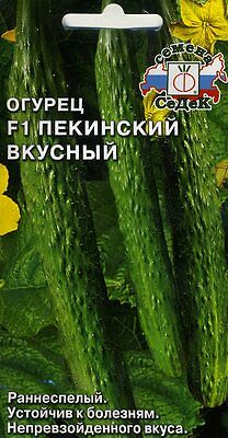 "Cucumber ""Delicious Peking F1"" Russian High Quality."