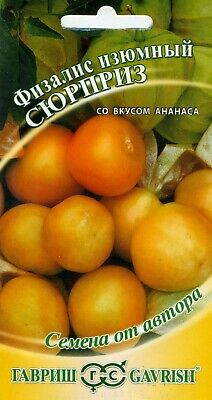"Physalis ""Pineapple"" Russian High Quality"