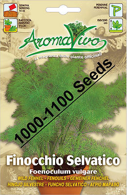 Wild Fennel  Herb Seeds (1000 - 1100 seeds) Superior Quality Very Fresh seeds.