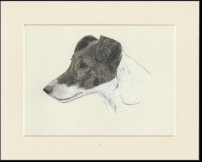 Smooth Fox Terrier Old Vintage Dog Head Study Colour Art Print Ready Mounted