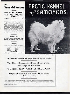 Samoyed Old Vintage 1940's Arctic Kennels Dog Breed Advert Print Page