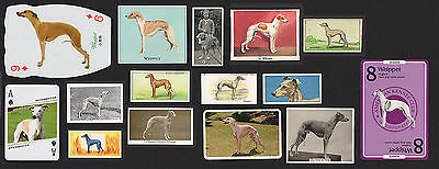 15 Original Vintage Whippet Collectable Dog Cigarette Trade And Breed Cards