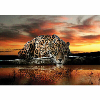 "Vlies Fototapete ""no. 315"" ! Tiere Tapete Jaguar Sonnenuntergang Wasser orange"