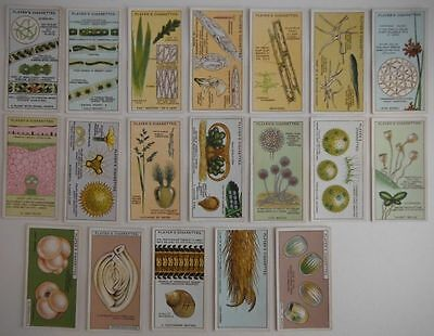 (19) Players Hidden Beauties Near Complete Set Tobacco Cards