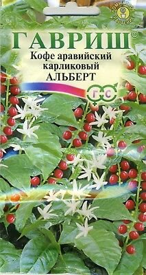 "Coffee dwarf ""Arabic""  Russian High Quality"
