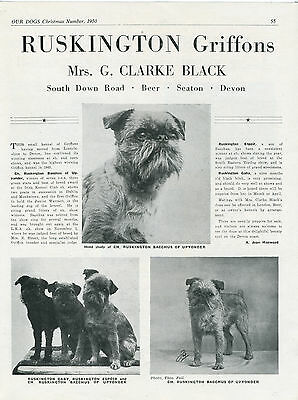 Brussels Griffon Our Dogs 1950 Dog Breed Kennel Advert Print Page Ruskington