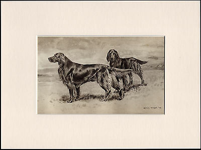 Irish Setter Dogs Rare Antique Dog Print By Wardle Ready Mounted