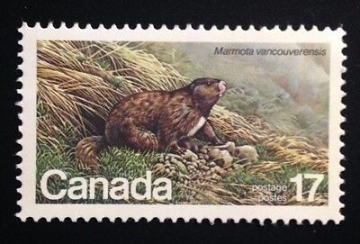 Canada #883 MNH, Canadian Endangered Wildlife - Marmot Stamp 1981