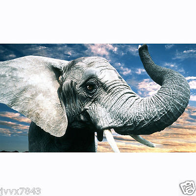 HD Canvas Painted Oil Painting Wall decor animal elephant modern No Frame 10
