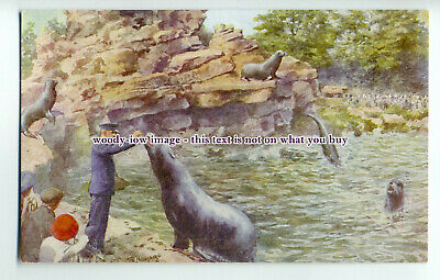 an0285 - Sea Lions being fed Fish by their Keeper, at London Zoo - postcard