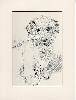 Sealyham Terrier Old 1930's Ready Mounted K F Barker Dog Art Print