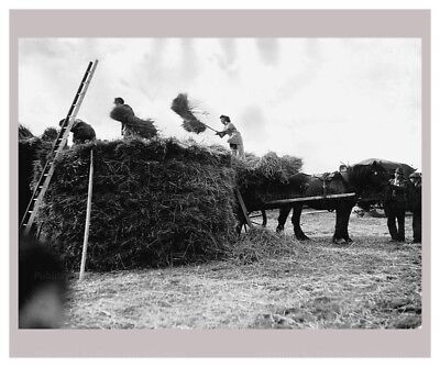 Photographic Print, Women at War - On the Land 9, WWII