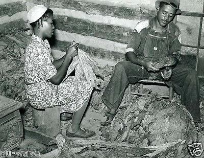 1939-Negro sharecropper and wife stripping and grading tobacco North Carolina