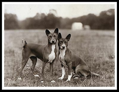 Basenji Two Dogs Great Vintage Style Sepia Photo Dog Print Poster