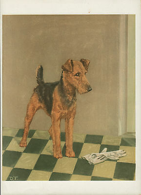 Airedale Terrier Lovely Old Vintage 1930's Diane Thorne Dog Bookplate Art Print