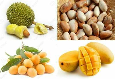 mix 30 fresh tropical mango,jackfruit,marian plum tree/plant/fruit asian seeds