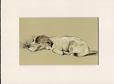 Jack Russell Sleeping Old Vintage 1930's Ready Mounted Lucy Dawson Dog Art Print