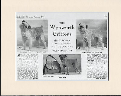 Brussels Griffon Named Dogs Old 1950's Dog Kennel Advert Print Ready  Mounted