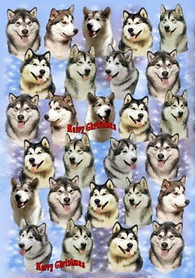 Alaskan Malamute Dog Christmas Wrapping Paper Design by Starprint