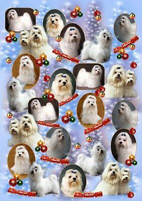 Maltese Terrier Dog Christmas Wrapping Paper Design by Starprint