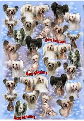 Chinese Crested Christmas Wrapping Paper Design by Starprint