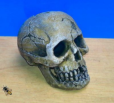 Aquarium Ornament Human Skull Vivarium Realistic Decoration Fish Tank New