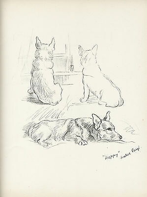 WELSH CORGI LOVELY OLD VINTAGE 1930'S DOG SKETCH PRINT by LUCY DAWSON