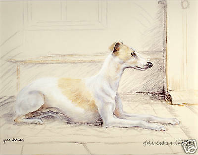 Whippet Hound Dog Fine Art Limited Edition Print