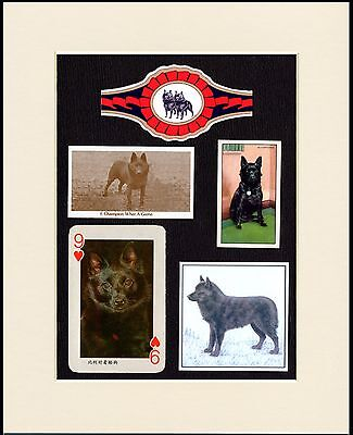 Schipperke Mounted Set Of Vintage Dog Collectable Cards And Bands