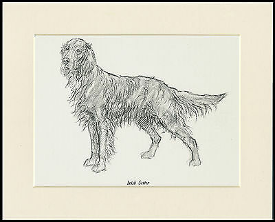 IRISH SETTER LOVELY VINTAGE 1930'S DOG ART PRINT by KF BARKER READY MOUNTED