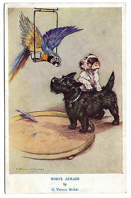 Scottish Terrier  And Parrot Old Vintage Dog Art Postcard Artist Vernon Stokes