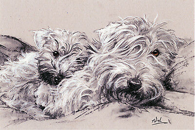 """SOFT COATED WHEATEN TERRIER SCWT DOG ART LIMITED EDITION PRINT - """"Soft Hearted"""""""