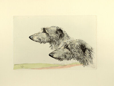 DEERHOUND SCOTTISH LURCHER DOG ART ENGRAVING PRINT - Head Studies by Ward Binks