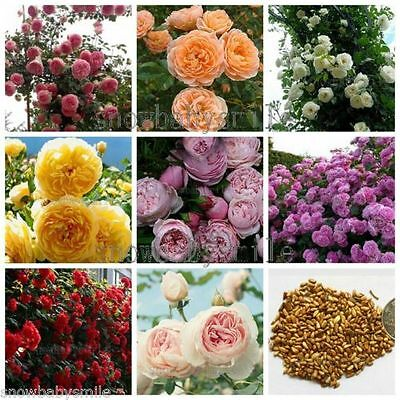 8 Kinds Climbing Rose Seeds Climber Rosa Multiflora Perennial Fragrant Flowers