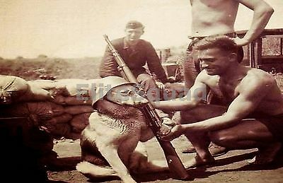 WW2 Photo Picture German soldiers posing their dog with K98 and helmet 274