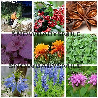 Varieties Herb Seeds Garden Aromatic Spices Plant Vegetable Medicinal Heirloom