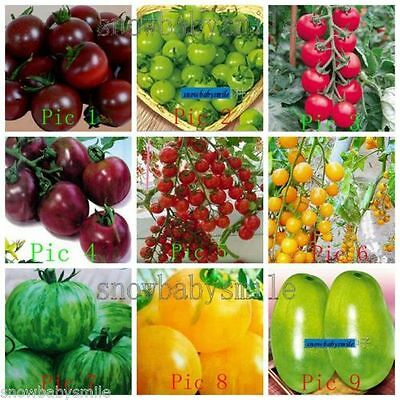 33 Kinds Tomato Seeds Black Purple Pink Cherry Fruit Vegetable Organic Heirloom