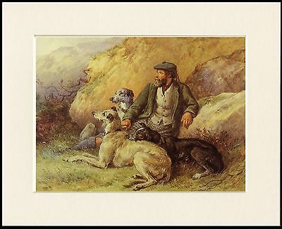 Deerhound Lovely Little Dog Print Gamekeeper  And Dogs Mounted Ready To Frame