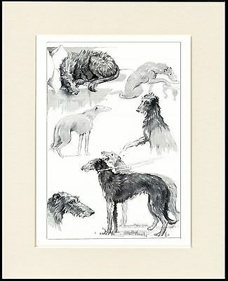 Scottish Deerhound Dogs In Various Moods Lovely Dog Print Mounted Ready To Frame