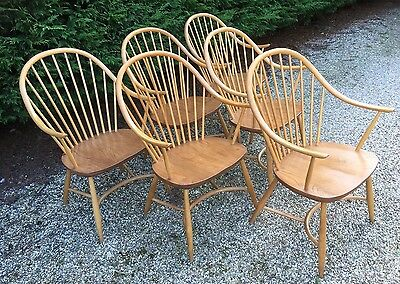 Superb Set Of 6 Ercol Cowhorn Latimer Dining Chairs, Very Clean Condition,