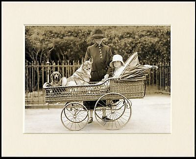 Elkhound Dachshund In Antique Baby Carriage Dog Print Mounted Ready To Frame