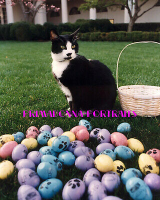 SOCKS, Easter 8X10 Lab Photo Beloved Presidential Clinton Family Cat Portrait