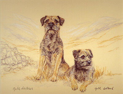 BORDER TERRIER DOG LIMITED EDITION PRINT - Signed Artist Proof - Numbered 27/85
